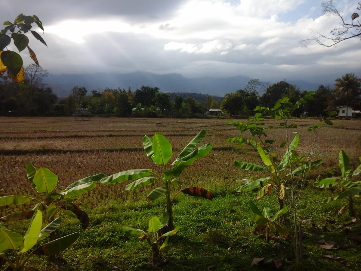 Co zabrać na dwudniowy trekking do dżungli na północy Tajlandii?