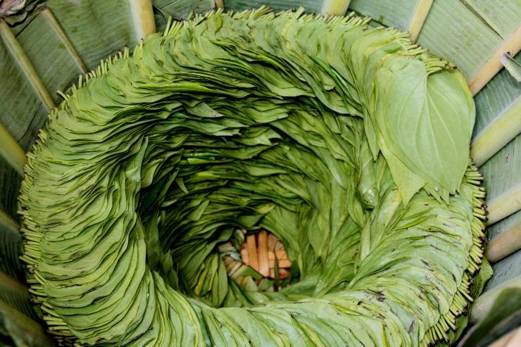 betel, liście